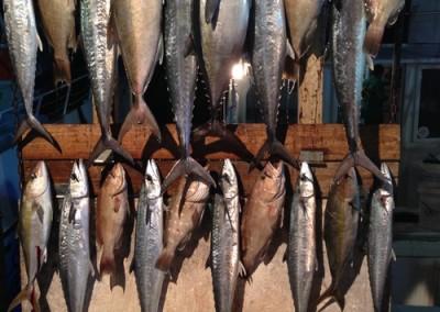 Fishing Rates - Charter Boat Huntress 12